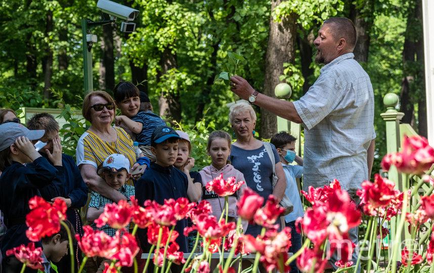 """Тюльпаны были в коллекции Петра I. Фото Святослав Акимов, """"Metro"""""""