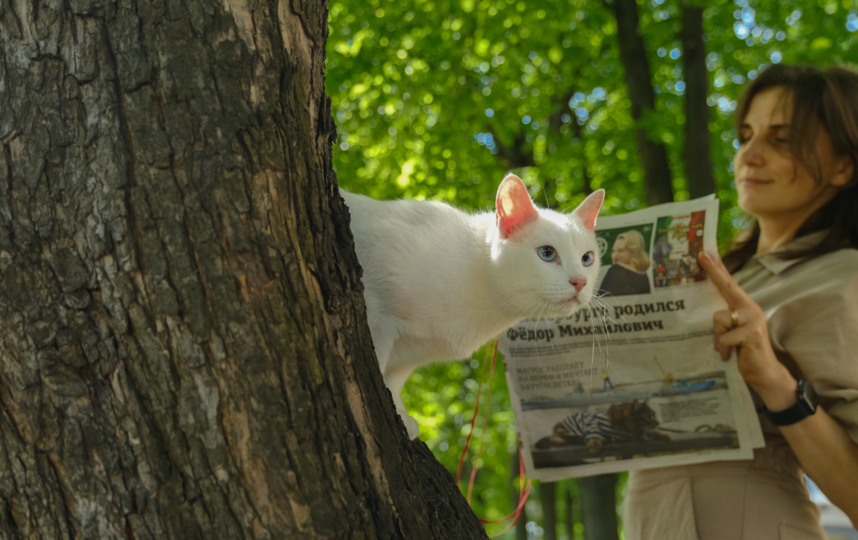 """Следит за ситуацией вокург, пока хозяйка изучает материалы газеты. Фото Алена Бобрович, """"Metro"""""""