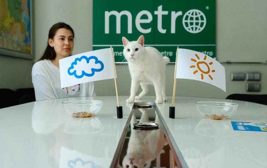 """Ахилл предсказал солнечную погоду на ЕВРО-2020. Будем надеяться, что оракул не ошибся. Фото Алена Бобрович, """"Metro"""""""