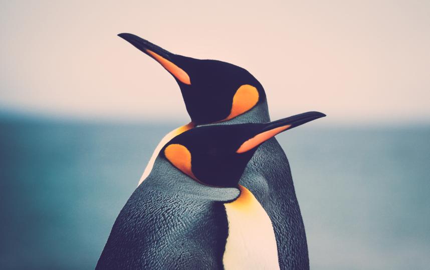 По мнению исследователей, их выводы могут быть очень полезны для природоохранной биологии. Фото ISTOK