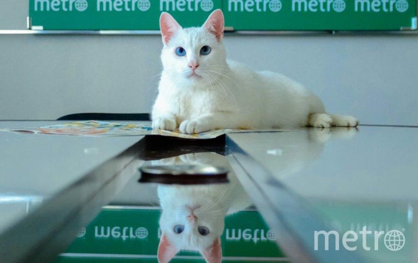 """Кот Ахилл. Фото Алена Бобрович., """"Metro"""""""