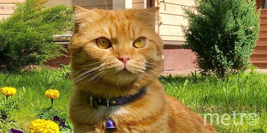 Кот Губерниева сделал важный выбор. Фото Instagram кота Дмитрия Губерниева.