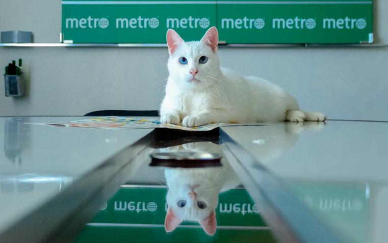 "Ахилл. Фото Алена Бобрович, ""Metro"""