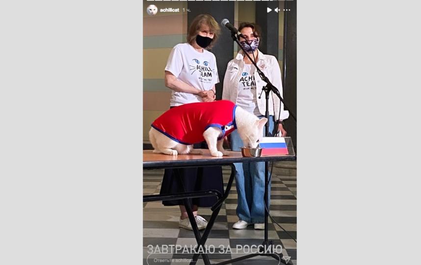 Сегодня Ахилл позавтракал за сборную России. Фото Скриншот Instagram @achillcat