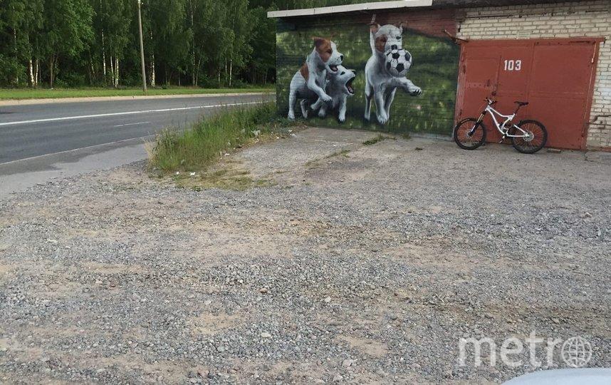Увидеть стрит-арт можно в Сосновом Бору. Фото vk.com/sosnovy_bor.