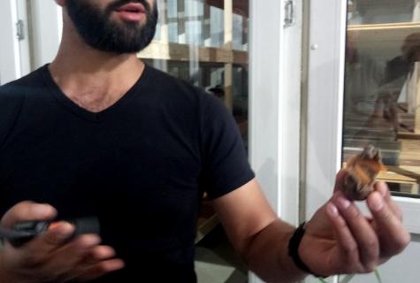 Максим угощает улитками туристов в дегустационном зале, но со временем планирует их поставлять в рестораны и магазины.
