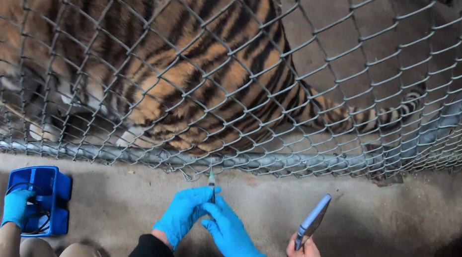 Первыми вакцину получат животные из повышенной группы риска. Фото Скриншот с сайта зоопарка.