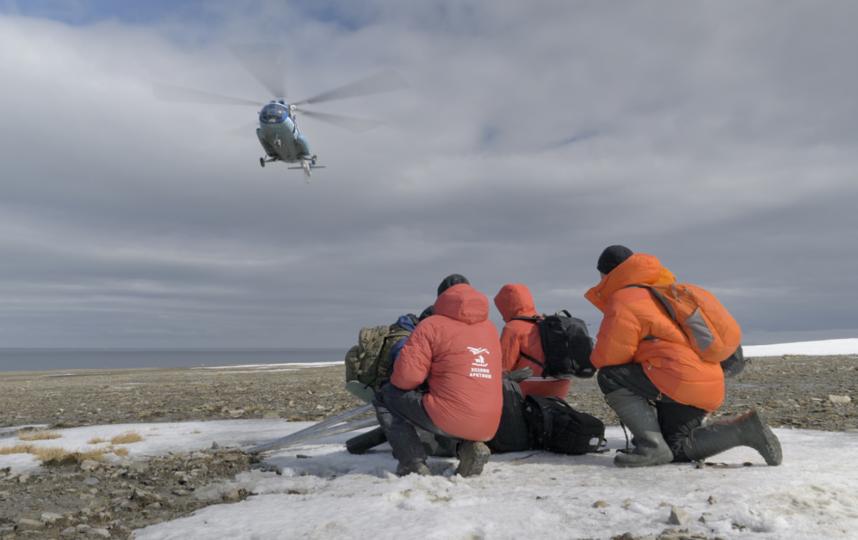 """Экспедиционная команда с нетерпением ждёт вертолёта после знакомства с мишкой. Фото пресс-служба фонда """"Чистые моря"""""""