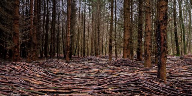 Деревянные волны в лесу.