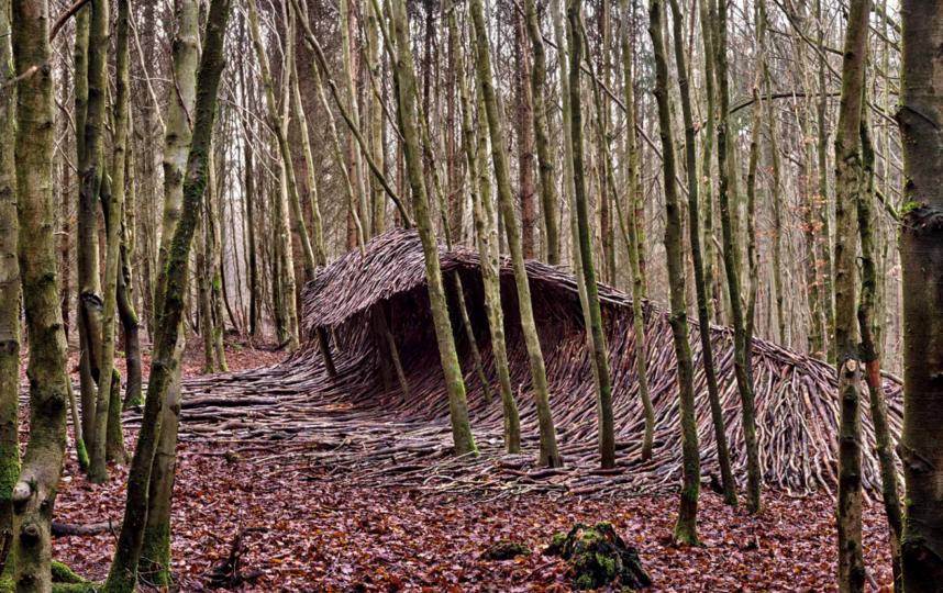 Деревянные волны в лесу. Фото METRO WORLD NEWS