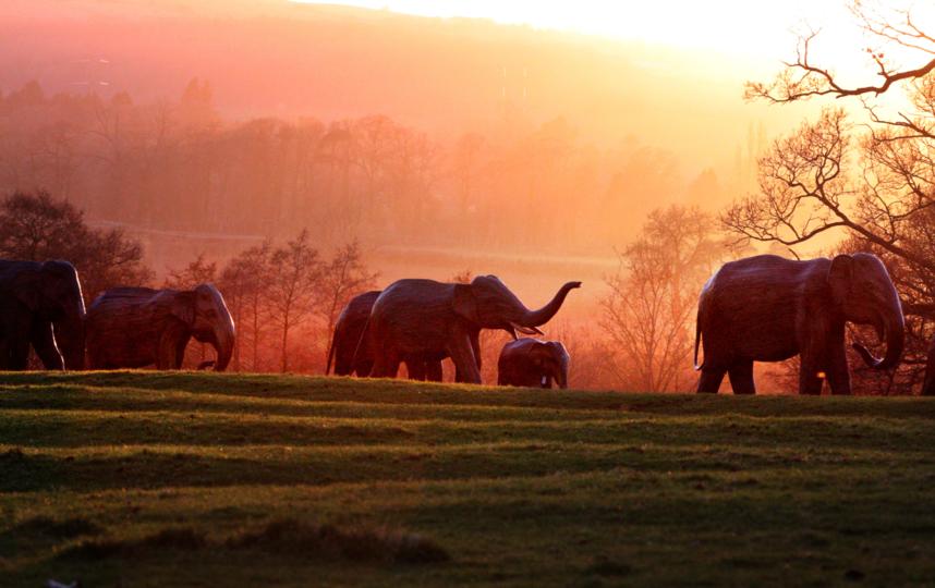 """Скульптуры слонов выглядят как настоящие, потому что их скопировали с реальных точь-в-точь. Фото предоставлено организацией """"Семья слонов"""""""