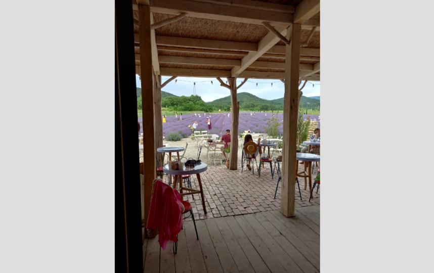 """Вид на поле из кафе. Фото Назарова Евгения, """"Metro"""""""