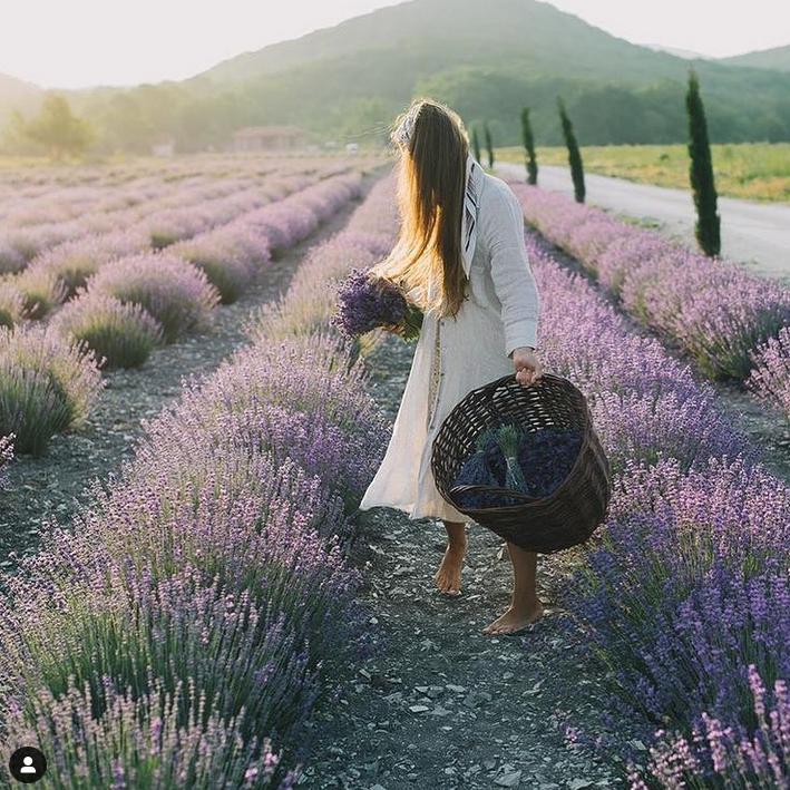 Скриншот Instagram @_maison_des_plantes_.