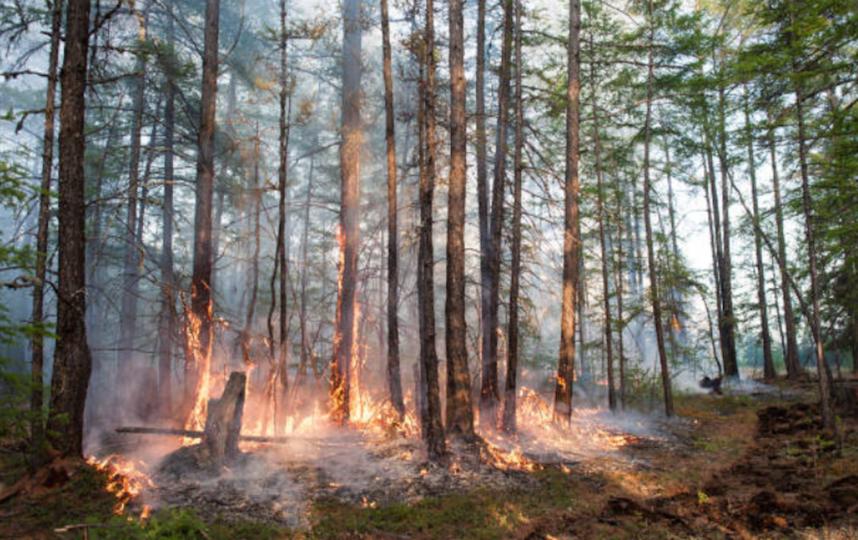 Из-за лесных пожаров в Якутии сгорело 8 миллионов гектаров территории. Фото Getty