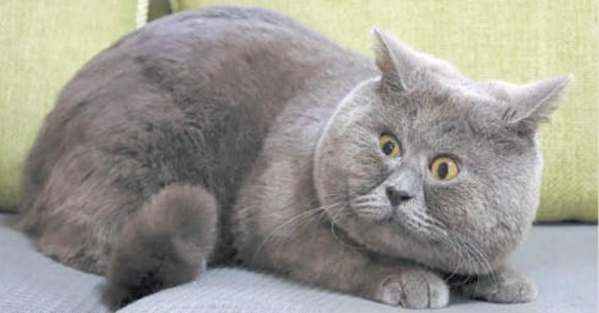 У кота Феди 140 тысяч подписчиков в TikTok. Фото Наталья Жданова.