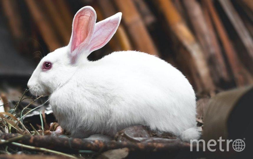 Кроликов отдадут в хорошие руки. Фото unsplash.com.