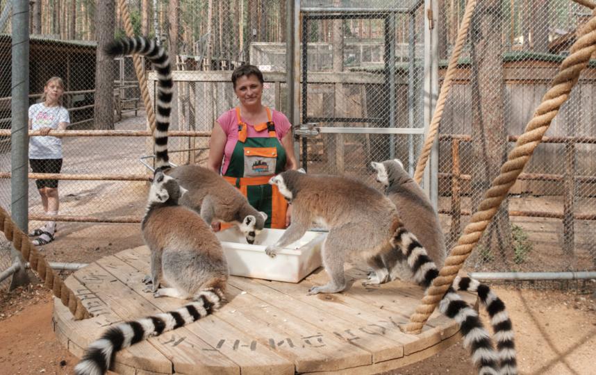 """Главная боль сотрудников – это желание посетителей накормить животных чем-нибудь """"вкусненьким"""". Фото Алена Бобрович, """"Metro"""""""