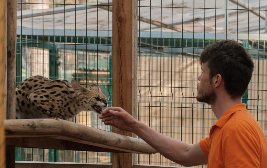 """Посетителям запрещено кормить животных, это могут делать только сотрудники зоопарка. Фото Алена Бобрович, """"Metro"""""""