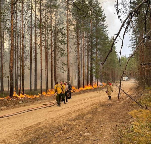 В Карелии бушуют лесные пожары. Фото https://vk.com/aparfenchikov, vk.com