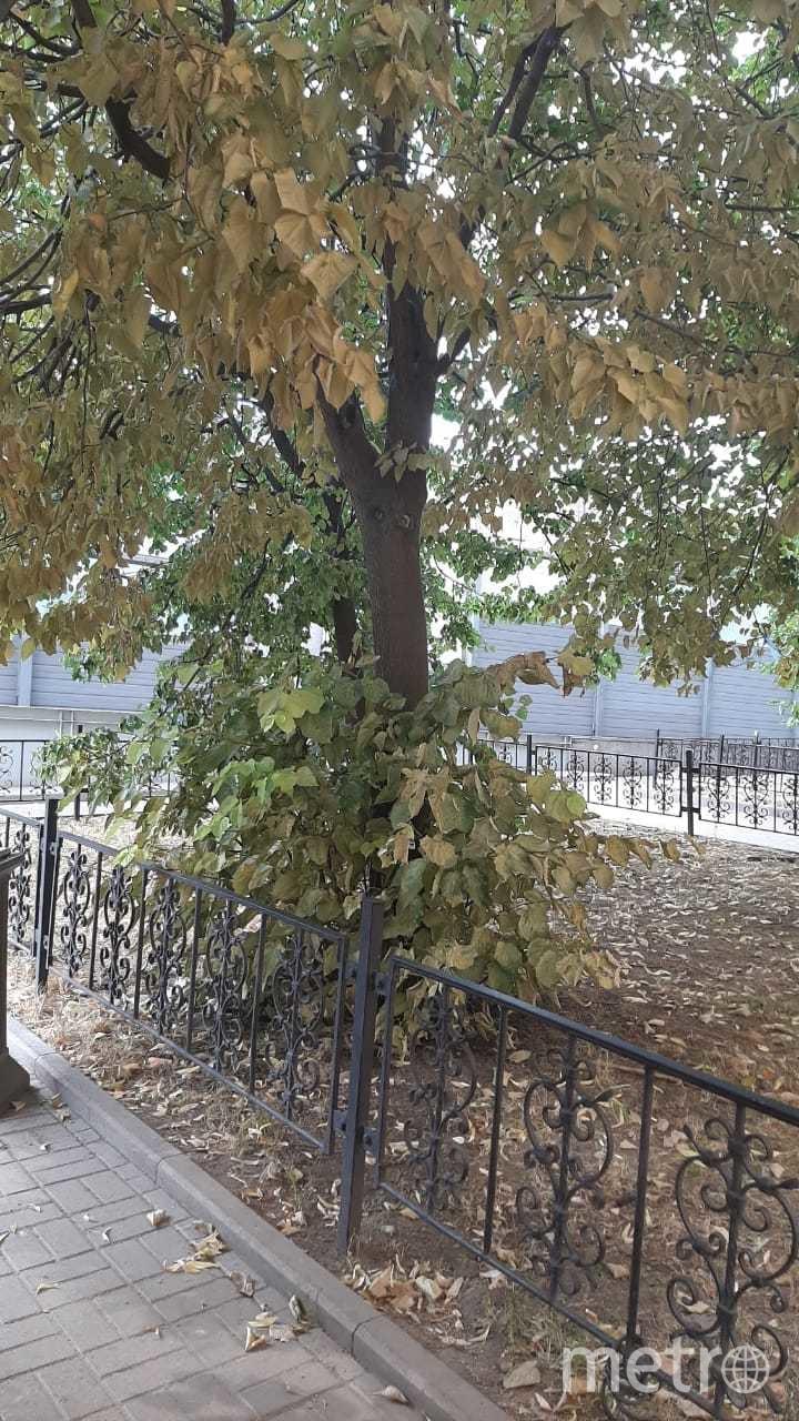 """В Петербурге раньше срока начали желтеть деревья. Фото Юлия Журавлева, """"Metro"""""""