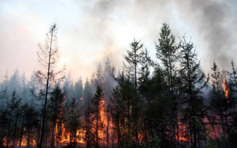 Лсные пожары в Якутии уничтожили миллионы гектаров леса. Фото Getty