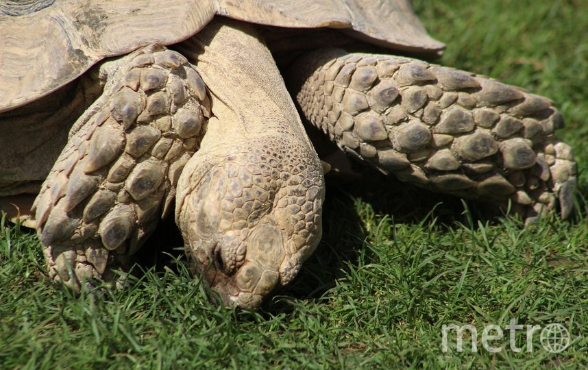 Черепахи считаются символом мудрости, но это из-за возраста. Фото Pixabay