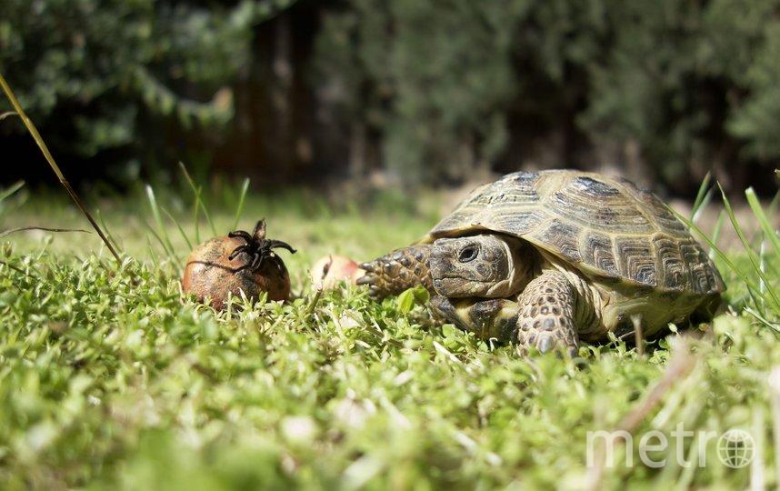 Черепахи гораздо умнее, чем вы думали. Фото Pixabay