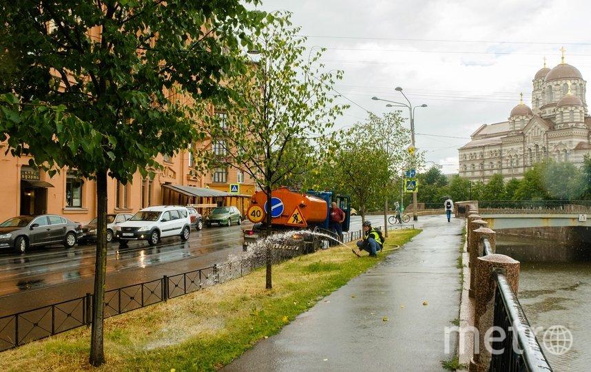"""Холодный душ для молодых деревьев . Фото Алена Бобрович, """"Metro"""""""