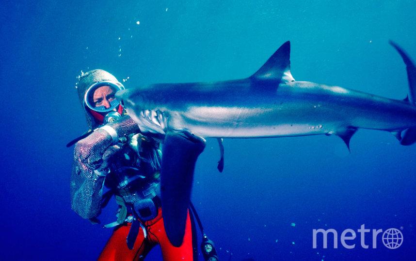 """Игры с акулами"". Фото Metro World News."