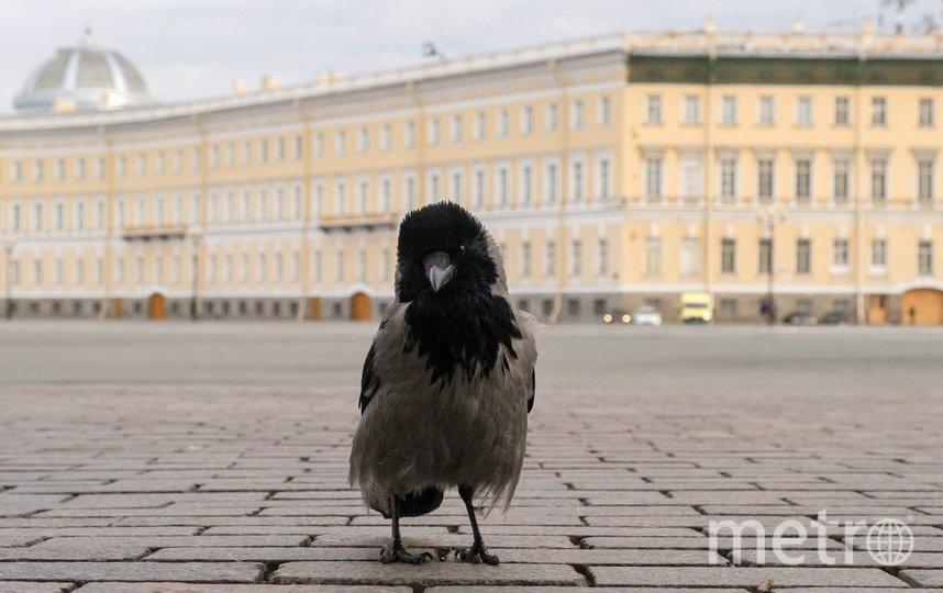 "Санкт-Петербург. Фото Алена Бобрович, ""Metro"""