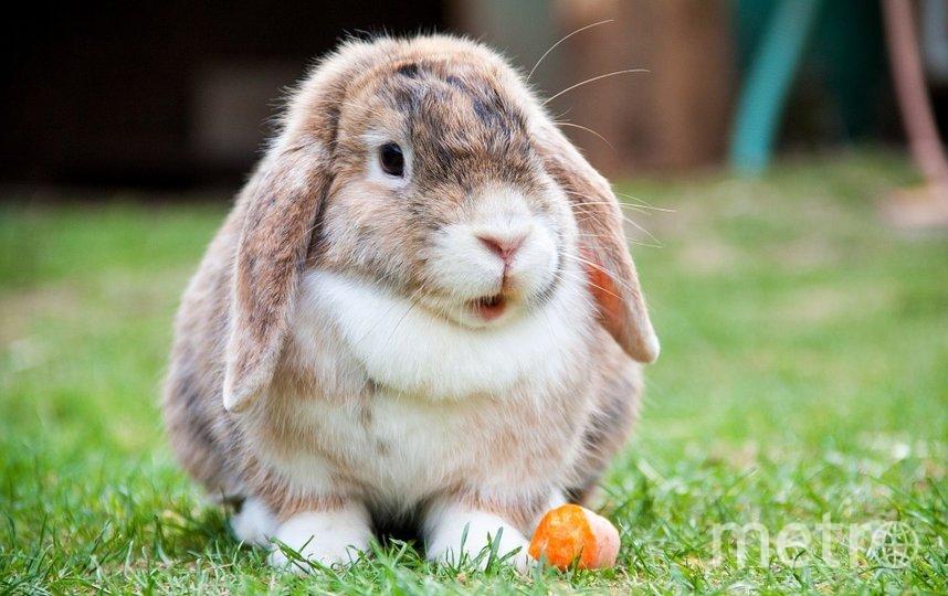 """В ГД отмечают, что в зоомагазинах животные содержатся в """"безобразных"""" условиях. Фото Pixabay"""