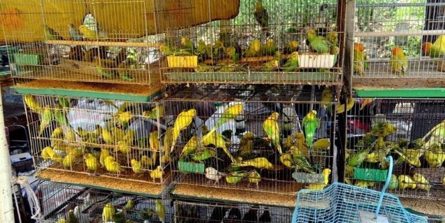 """В ГД отмечают, что в зоомагазинах животные содержатся в """"безобразных"""" условиях."""