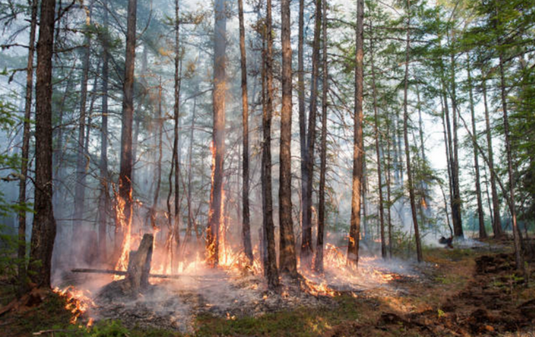 Всего в Якутии было зафиксировано 1227 лесных пожаров. Фото Getty