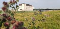 Сад непрерывного цветения появится на набережной реки Охты весной 2022 года