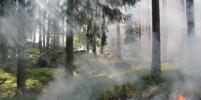 Один из отелей в Бодруме эвакуируют из-за лесного пожара