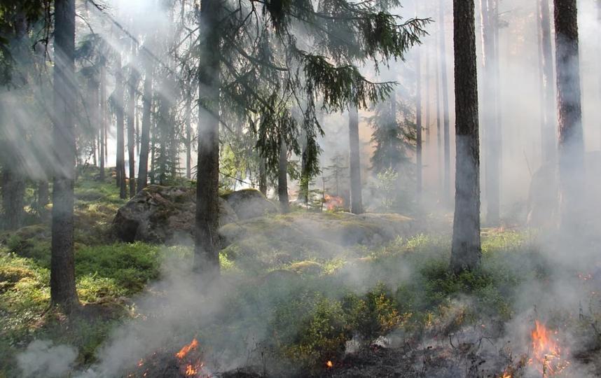 Пожары продолжаются в семи регионах страны. Фото Pixabay.