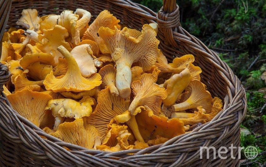 Лисички можно варить, жарить, тушить, мариновать, солить, сушить, замораживать. Фото pixabay.com