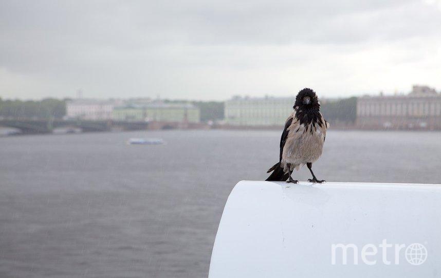 В Петербурге ожидается 80% от месячной нормы осадков. Фото Pixabay
