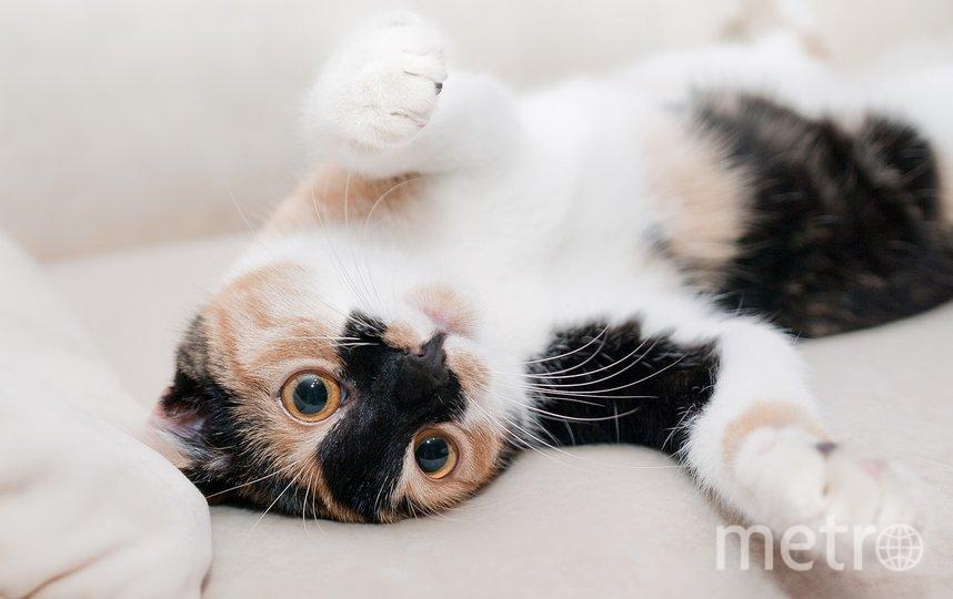 По мнению эксперта, кошки часто недооцениваются учеными. Фото pixabay