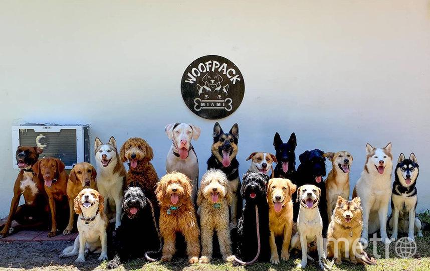 Центр дрессировки животных делает кадры для своего удовольствия. Фото Metro World News.