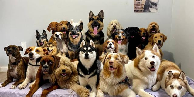 Центр дрессировки животных делает кадры для своего удовольствия.