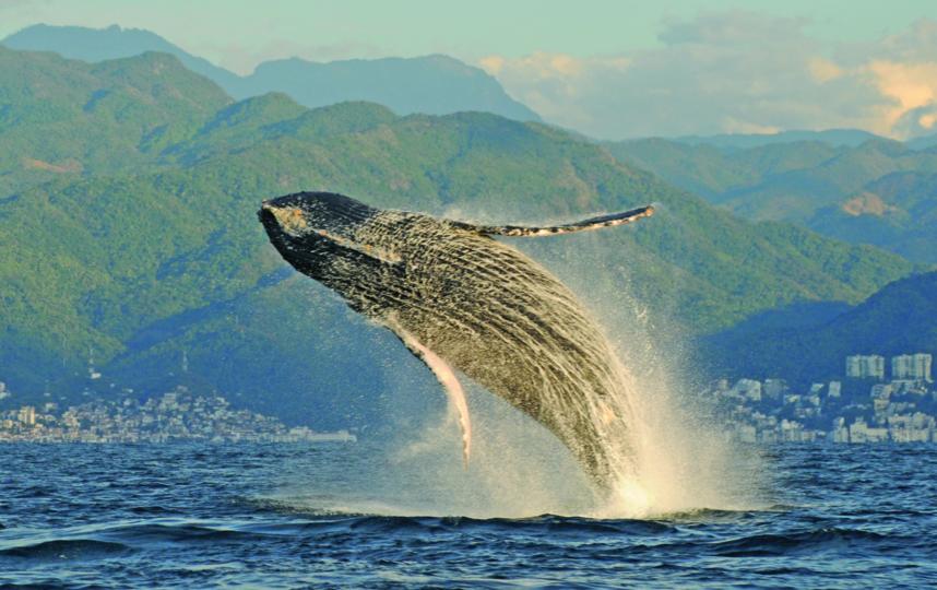 Встреча с морским гигантом подарит вам незабываемые эмоции и впечатления. Фото Фото предоставлено героем публикации.