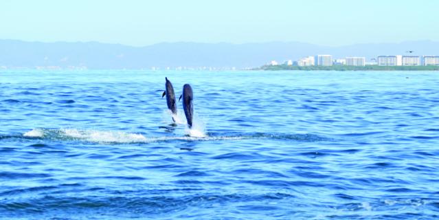 Встреча с дельфинами также подарит положительные эмоции.