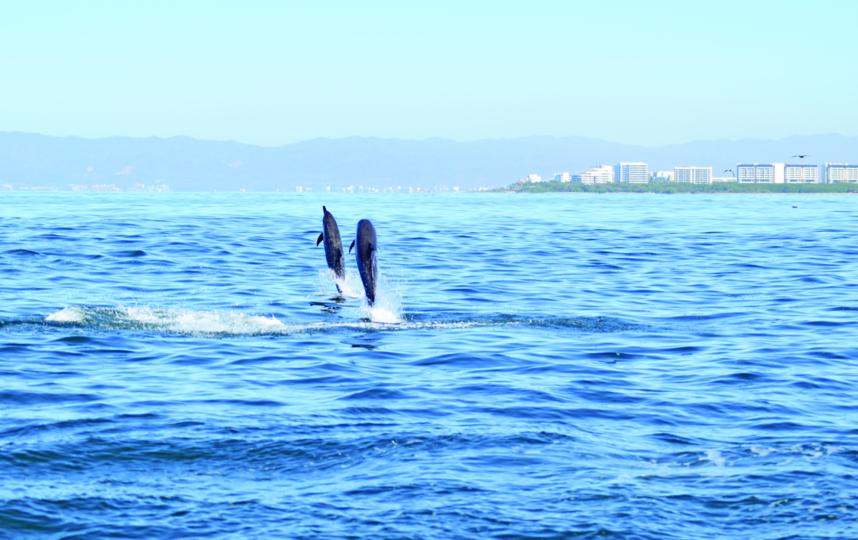 Встреча с дельфинами также подарит положительные эмоции. Фото Фото предоставлено героем публикации.