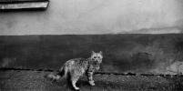 Кошки очень фотогеничны
