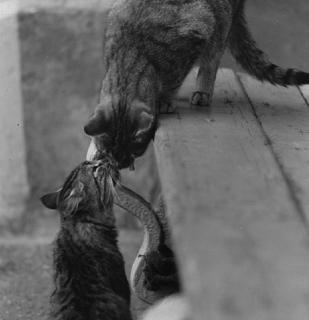 Кошка человеку - родственник.