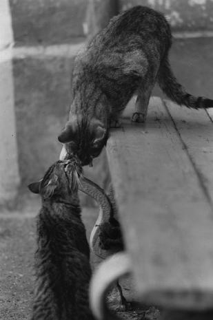Кошка человеку - родственник. Фото Фото предоставлены героем публикации.