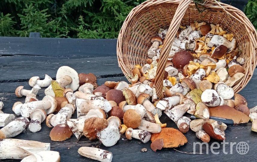Сезон грибов в самом разгаре. Фото vk.com/grib_spb.