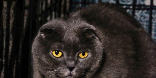 Кот  попал в приют в марте, когда его  хозяин умер от коронавируса.