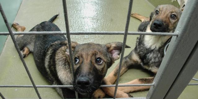 Приюты для бездомных животных в Северной столице переполнены.